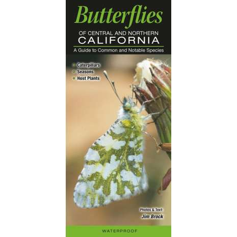 Insect Identification Guides :Butterflies of Central & Northern California: A Guide to Common & Notable Species