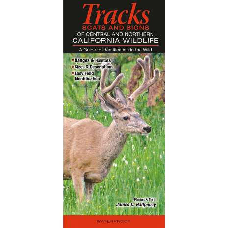 California :Mammals of Central and Northern California: Tracks, Scats and Signs
