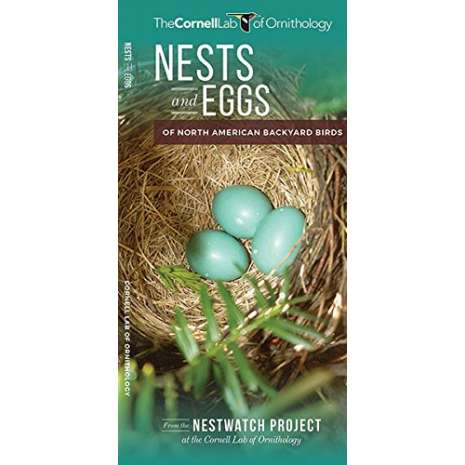 Bird Identification Guides :Nests and Eggs of North American Backyard Birds