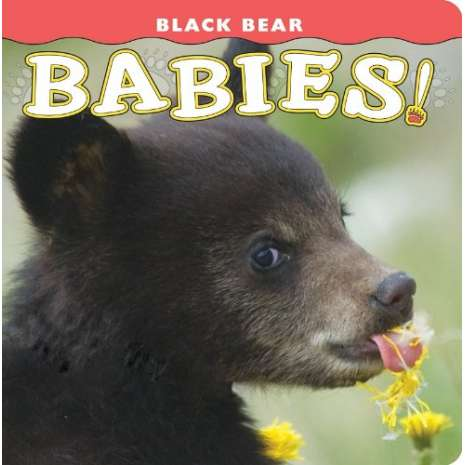 Baby Animals :Black Bear Babies!