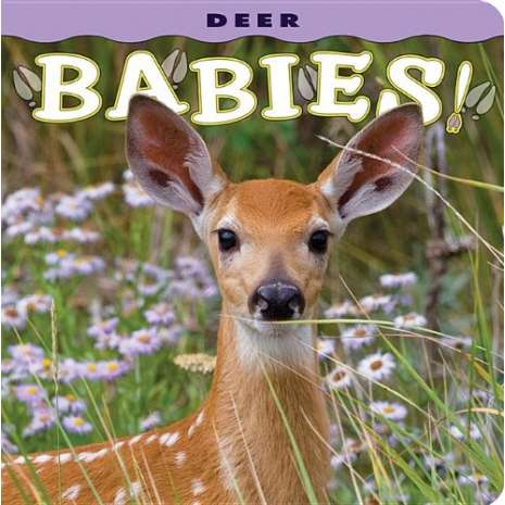 Baby Animals :Deer Babies!