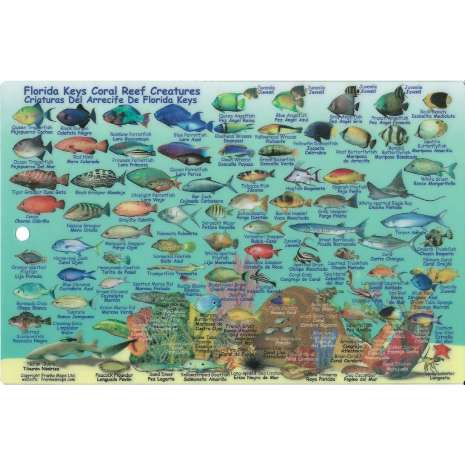 Fish & Sealife Identification Guides :Turks & Caicos Dive Map & Reef Creatures Guide LAMINATED CARD