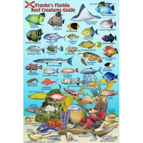 Fish & Sealife Identification Guides, Florida Reef Creatures Guide LAMINATED CARD