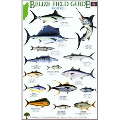 Fish & Sealife Identification Guides, Belize Field Guide: Sport Fish