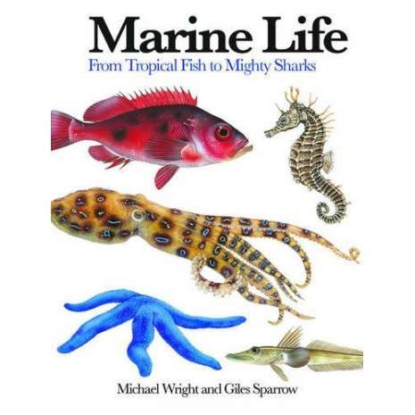 Fish & Sealife Identification Guides :Marine Life
