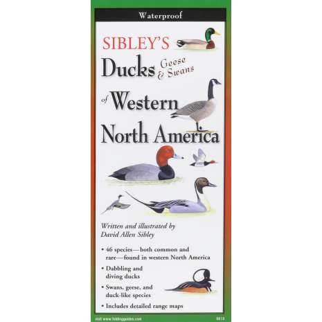 Bird Identification Guides :Sibley's Ducks, Geese,& Swans of Western N.A.