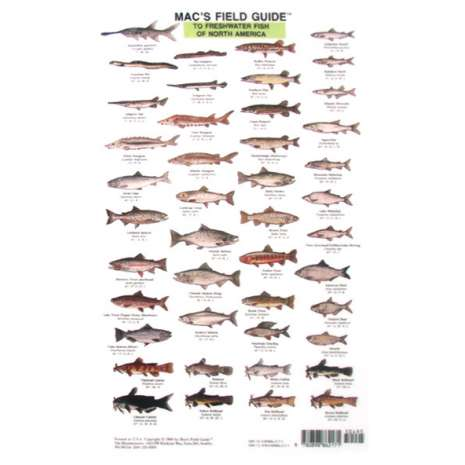 Fish & Sealife Identification Guides :Mac's Field Guides: North American Freshwater Fish