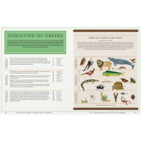 Animals :The Animal World: The Amazing Connections and Diversity Found in the Animal Family Tree
