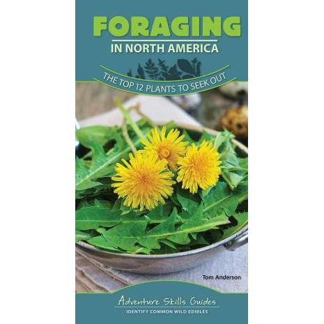 Foraging :Adventure Skills Guides: Foraging in North America: The Top 12 Plants to Seek Out
