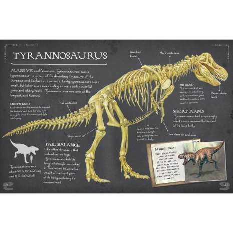 Dinosaurs, Fossils, Rocks & Geology :Dinosaur Bones: And What They Tell Us