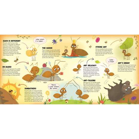 Butterflies, Bugs & Spiders :Anthill