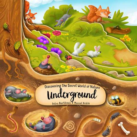 Board Books: Zoo :Discovering the Secret World of Nature Underground