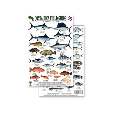 Fish & Sealife Identification Guides :Costa Rica Sport Fish Field Guide (Laminated 2-Sided Card)
