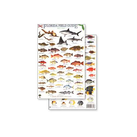 Books for Aquarium Gift Shops :Florida Reef Fish Field Guide (Laminated 2-Sided Card)