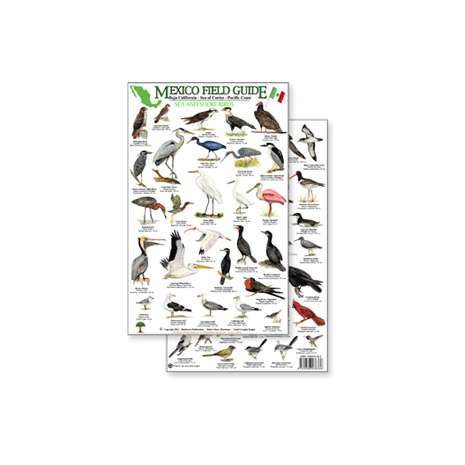 Bird Identification Guides :Mexico Field Guide: Baja, Sea of Cortez Sea & Shore Bird Guide (Laminated 2-Sided Card)