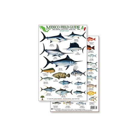 Fish & Sealife Identification Guides :Mexico Field Guide:  Baja, Sea of Cortez Sport Fish (Laminated 2-Sided Card)