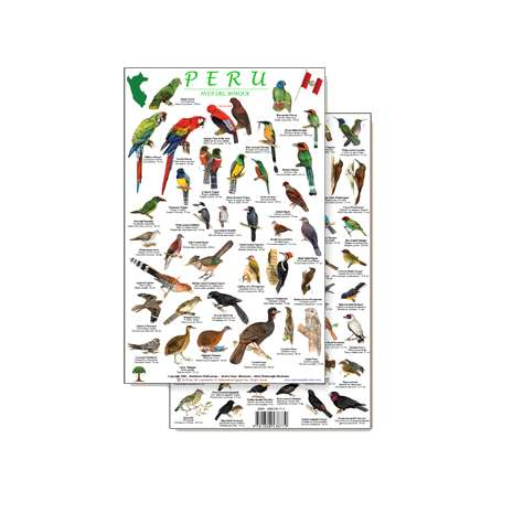 Bird Identification Guides :Peru Forest Bird Guide (Laminated 2-Sided Card)