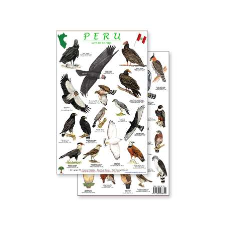 Bird Identification Guides :Peru Raptors Bird Guide (Laminated 2-Sided Card)